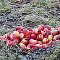 #apples by Stefan Pettersson