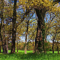 Appleton Farm by K Hines