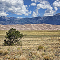 Approaching Great Sand Dunes #2 by Nikolyn McDonald
