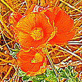 Apricot Globemallow In Vermilion Cliffs National Monument-arizona by Ruth Hager