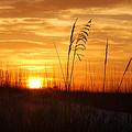 April Morning Grasses by Michael Thomas