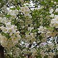 April's Bouquet by Nancy Kane Chapman