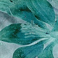 Aqualily by WB Johnston