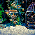 Aquarium Art by Kathleen K Parker