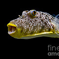 Aquarium Fish by David Arment