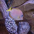 Aquarium Impression by Gene Norris