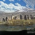 Aquarium Penguins Line Dance by Marian Bell