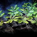 Aquatic Leaves by Joyce Baldassarre