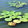 Aquatic Plants by Valentino Visentini