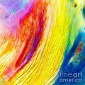 Arabian Desert Rainbow by Phill Petrovic