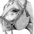 Arabian Halter by Kayleigh Semeniuk