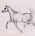 Arabian Horse  2014 02 25b by Angel Ciesniarska