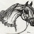 Arabian Horse Drawing 22 by Angel Ciesniarska