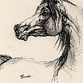Arabian Horse Drawing 26 by Angel Ciesniarska