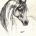 Arabian Horse Drawing 28 08 2013 by Angel Ciesniarska