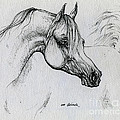 Arabian Horse Drawing 28 by Angel  Tarantella