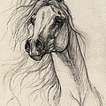Arabian Horse Drawing 37 by Angel Ciesniarska