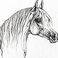 Arabian Horse Drawing 47 by Angel Ciesniarska