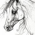 Arabian Horse Drawing 49 by Angel Ciesniarska