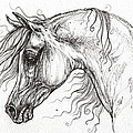 Arabian Horse Drawing 53 by Angel Ciesniarska