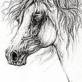 Arabian Horse Drawing 54 by Angel Ciesniarska