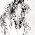 Arabian Horse Drawing 55 by Angel Ciesniarska