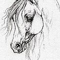 Arabian Horse Drawing by Angel Ciesniarska