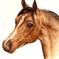 Arabian Horse Head Study by Julia Sweda