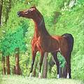 Arabian Horse In A Forest Clearing by Dorota Zdunska