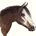 Arabian Horse by Michael Vigliotti