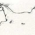 Arabian Horse Sketch 2014 05 24 C by Angel Ciesniarska