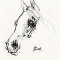 Arabian Horse Sketch 2014 05 28c by Angel Ciesniarska