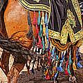 Arabian Native Show by Barbara Zahno