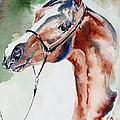 Arabian Stallion by Adele Pfenninger