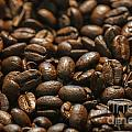 Arabica Beans by Dale Powell