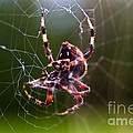 Arachnophobia by Scott Hervieux