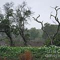 Aransas Nwr Landscape by Lizi Beard-Ward