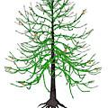 Araucaria Prehistoric Tree by Elena Duvernay