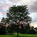 Arbor by Angus Hooper Iii