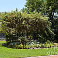 Arbor At Historical Park by Ruth  Housley