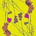 Arbor Autumn Harmony 12 by Tim Allen