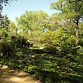 Arbor Glen 1 by Walter Neal