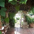 Arbor San Juan Capistrano by Kimberly-Ann Talbert