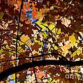 Arboretum Fall by Steven Ralser