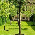 Arboretum  by Mair Hunt