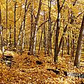 Arboretum Trail by Steven Ralser