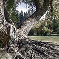 Arboretum Tree by Daniel Hagerman