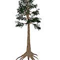Archaeopteris Prehistoric Tree by Elena Duvernay