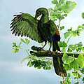 Archaeopteryx by Jane Burton