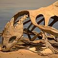 Archelon Relic by Maria Urso